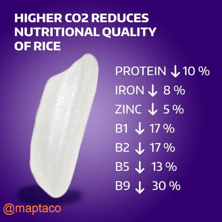 کاهش ارزش غذایی برنج